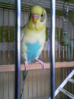 おるすばん鳥…